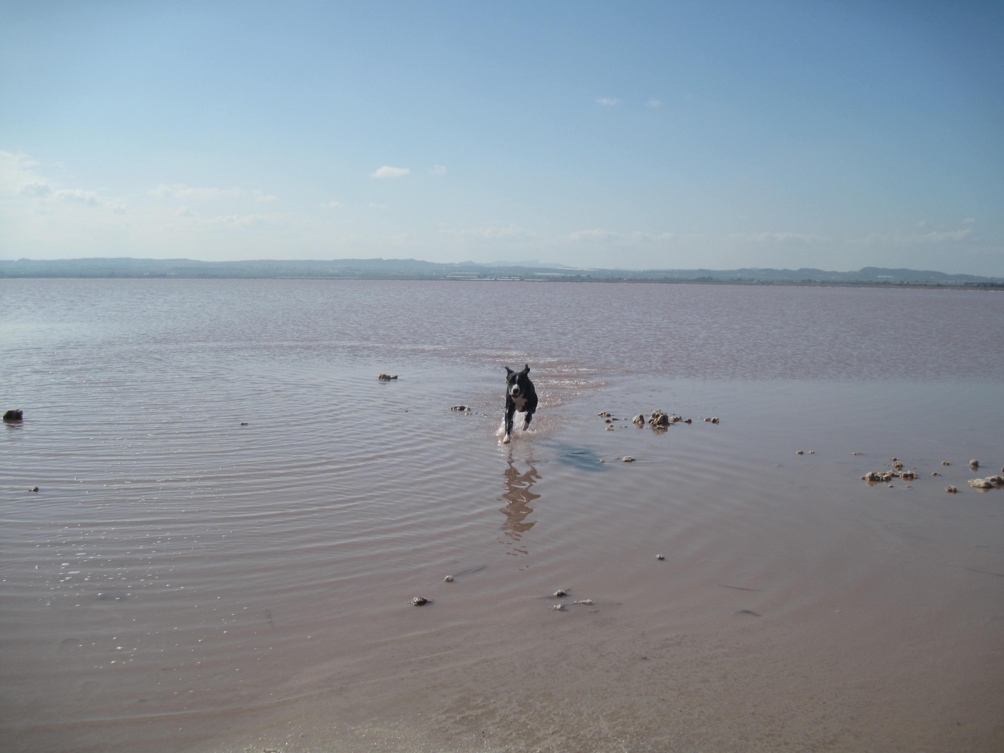 Salt lakes 019