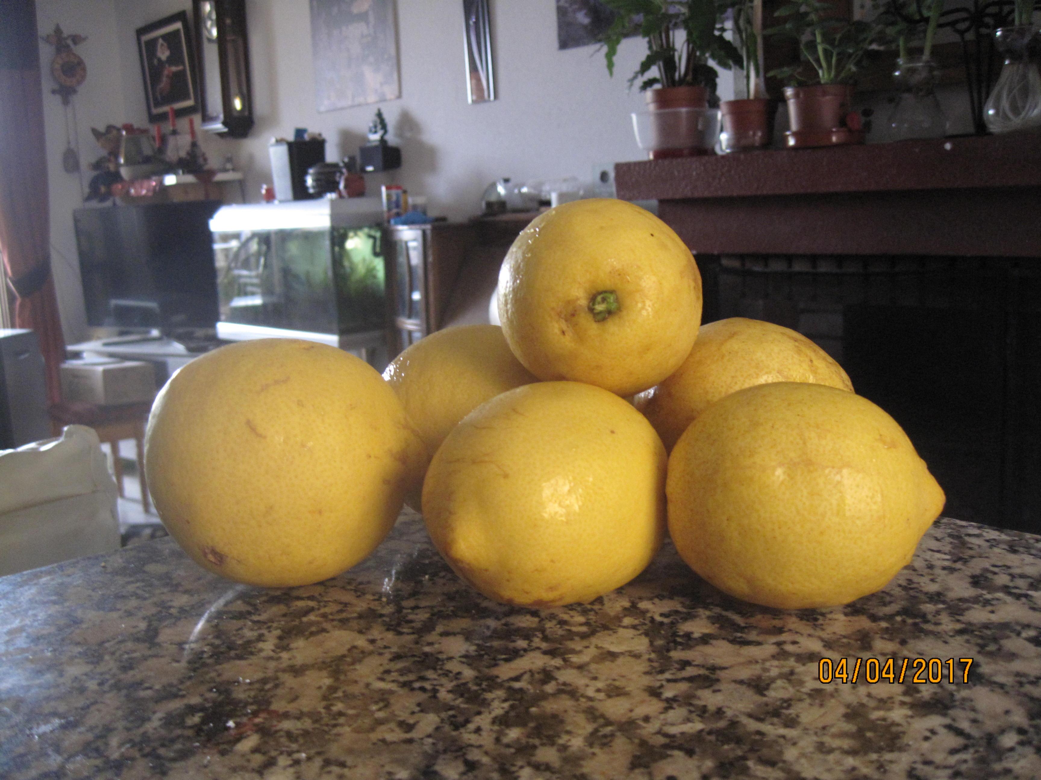 Lemon curd and marmalade 004